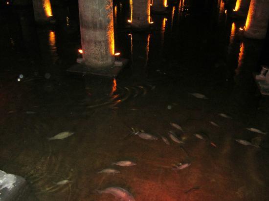 السمك في صهريج البازليك
