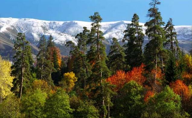 الحديقة الوطنية في بورجومي جورجيا
