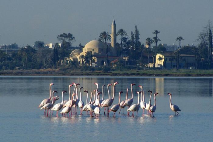 بحيرة الملح في لارنكا قبرص