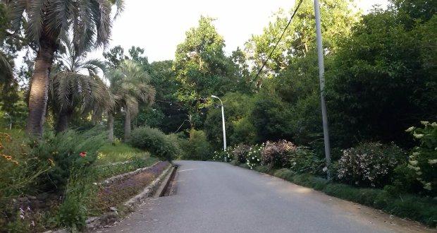 حديقة باتومي النباتية