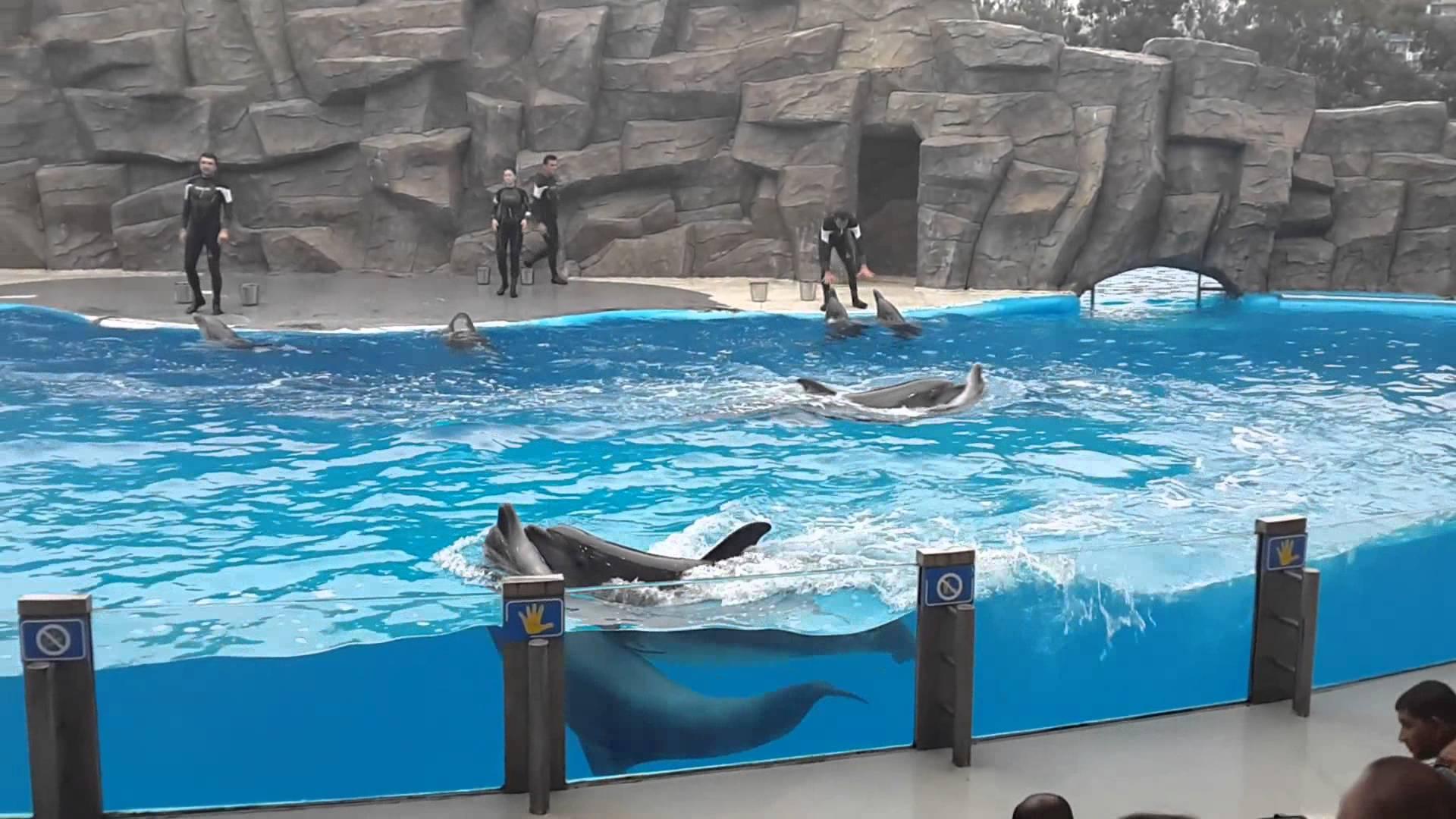 عرض الدلافين في مدينة باتومي جورجيا