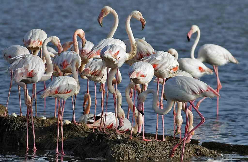 اماكن سياحية في ازمير من اهمها جنة الطيور وهي من اشهر اماكن السياحة في ازمير