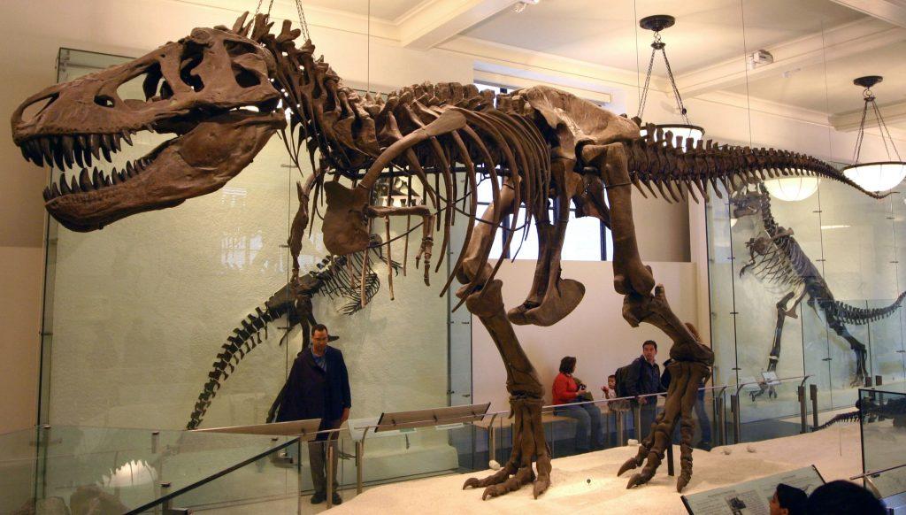 الاماكن السياحية في مانشستر - متحف مانشستر