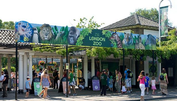 حديقة حيوانات لندن رحلة ترفيهية عائلية