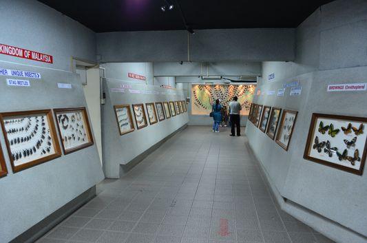 متحف حديقة الفراشات في كوالالمبور
