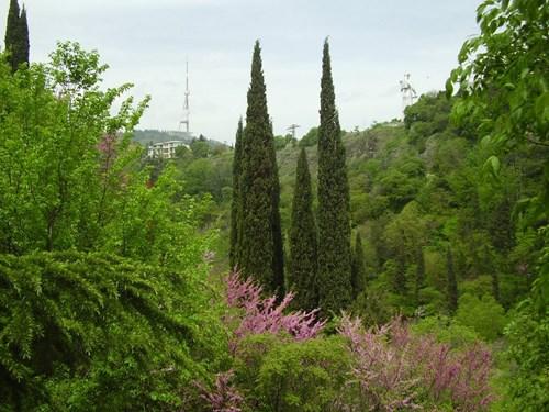 حديقة النباتات الوطنية في تبليسي