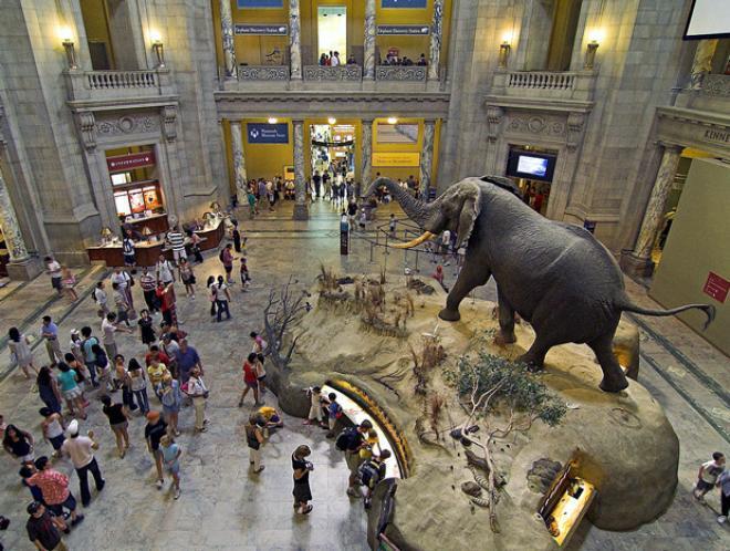 متحف التاريخ الطبيعي في لندن - متاحف لندن