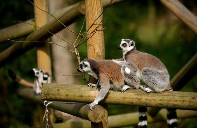 حديقة برمنجهام للحياة البرية من اهم معالم مدينة برمنجهام انحلترا