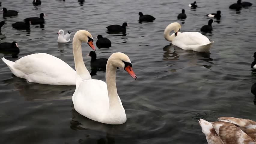 بحيرة ليمان سويسرا من اجمل اماكن السياحة في جنيف