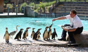 تعد حديقة الحيوانات في لندن من اشهر حدائق لندن السياحية ، تعرف في المقال على افضل الانشطة السياحية فيها بالاضافة الى افضل فنادق لندن القريبة من حديقة حيوان لندن