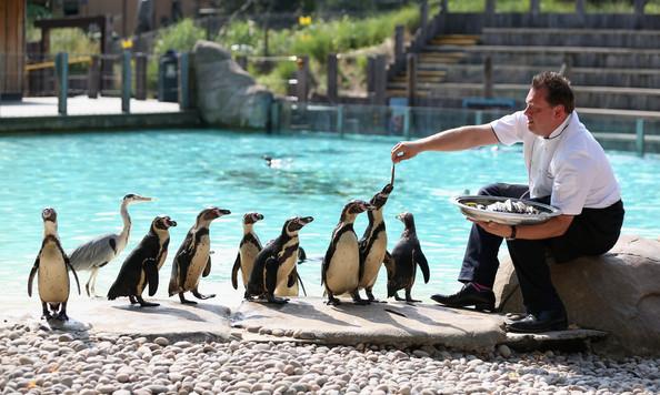 حديقة حيوان لندن من اشهر اماكن السياحة في لندن انجلترا