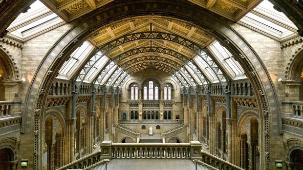 متحف التاريخ الطبيعي في لندن