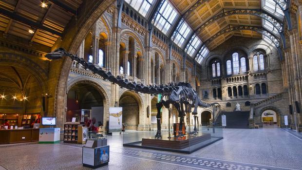 متحف التاريخ الطبيعي في لندن من اهم متاحف لندن