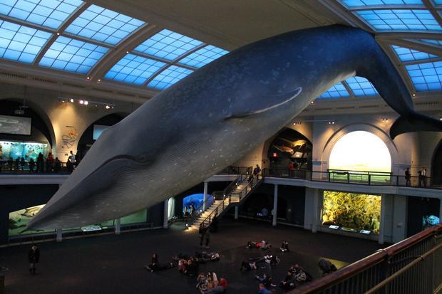 متحف التاريخ الطبيعي من اهم اماكن السياحة في لندن انجلترا