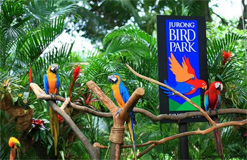 حديقة الطيور في بالي