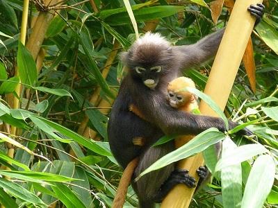 حديقة القرود في بينانج
