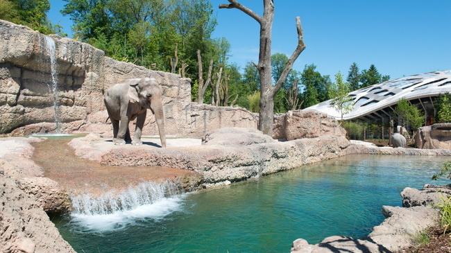 حديقة زيورخ للحيوانات