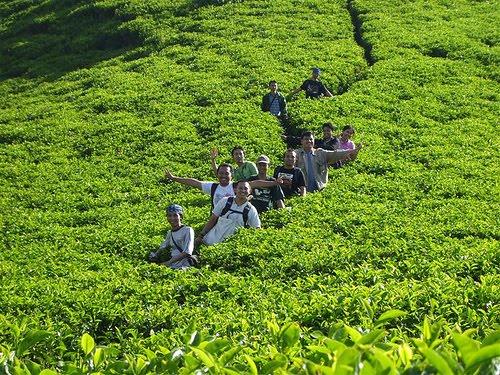 مزارع الشاي في تشيبودي باندونق