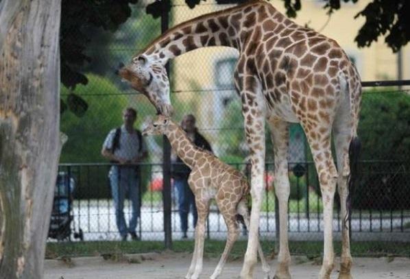 حديقة حيوانات شونبرون من المناطق السياحية في فيينا