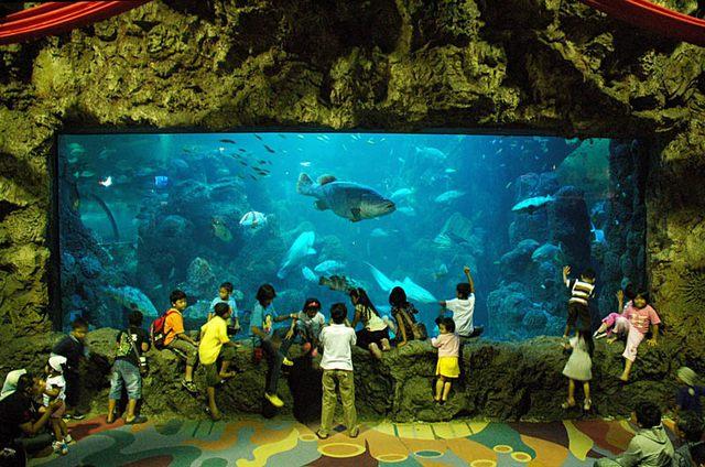 عالم البحار جاكرتا من اهم الاماكن السياحية في جاكرتا