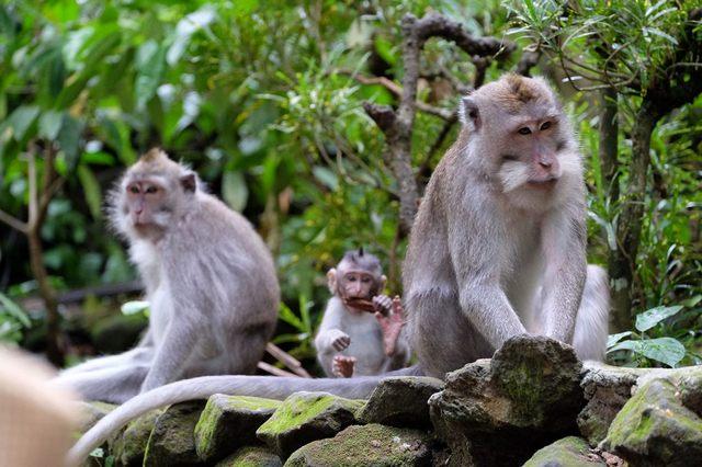 السياحة في اندونيسيا بالي