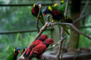 حديقة الطيور في كوالالمبور من افضل الاماكن السياحية في كوالالمبور ماليزيا