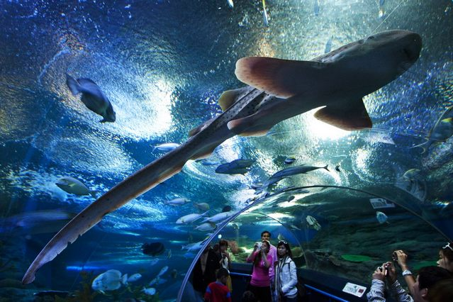 عالم تحت الماء في بتايا من اهم معالم بتايا السياحية