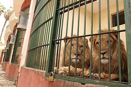 حديقة حيوانات الجيزة القاهرة