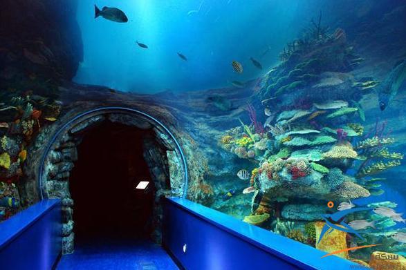 متحف الاحياء المائية