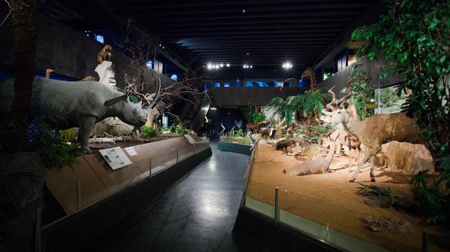 متحف التاريخ الطبيعي في جنيف