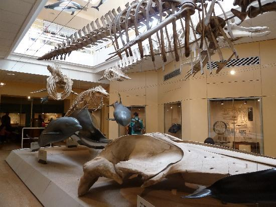 متحف لا مير في كان