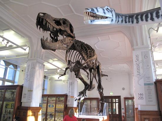متحف مانشستر في مدينة مانشستر انجلترا