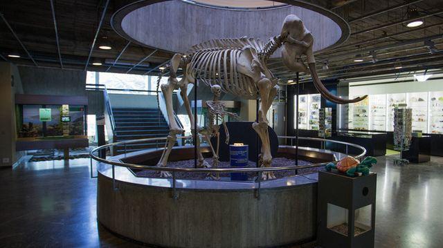 متحف التاريخ الطبيعي في جنيف من اهم معالم جنيف السياحية