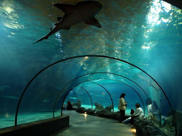 حديقة الحيوان بروتردام