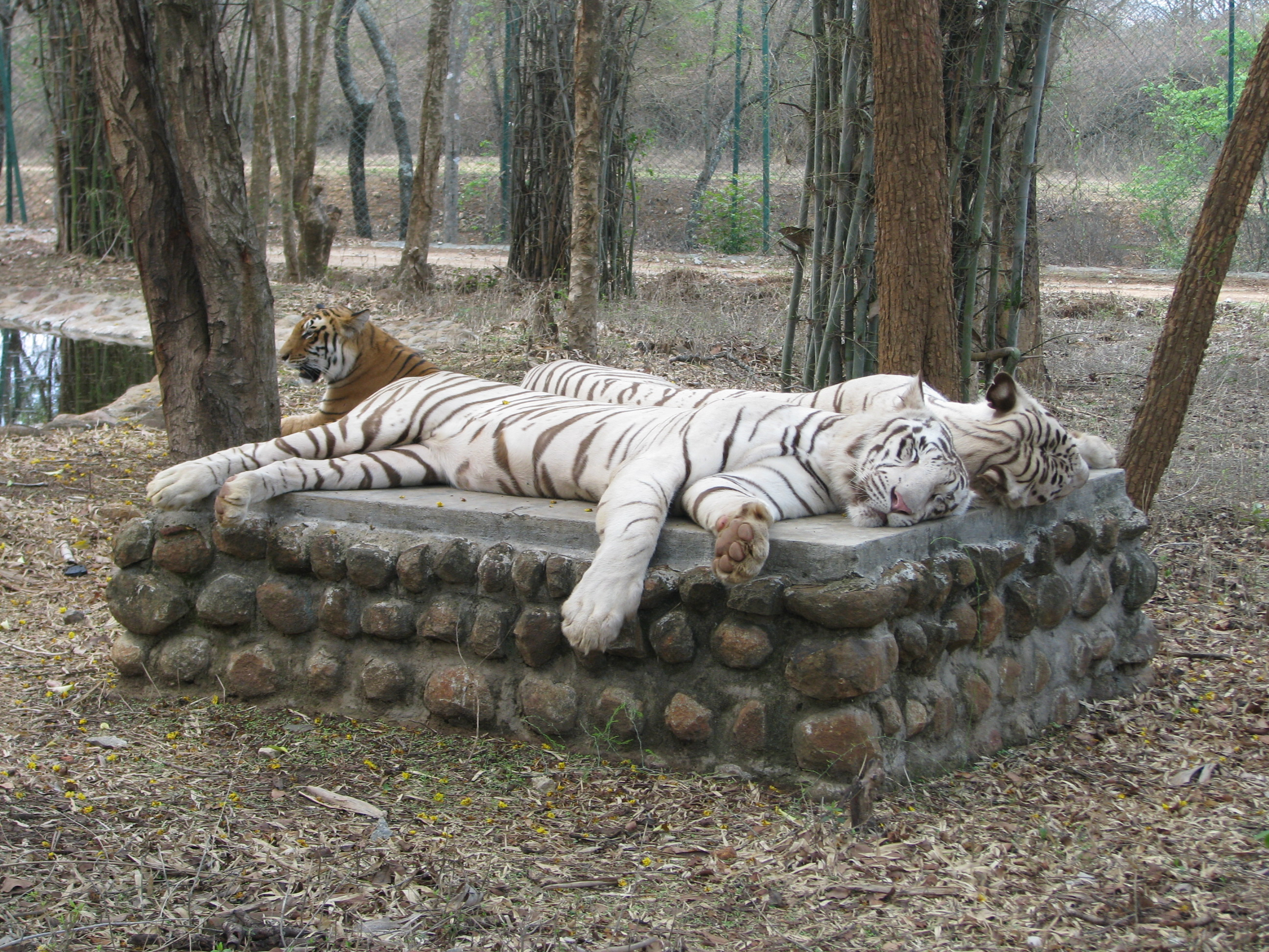 حديقة الحيوانات في بنجلور