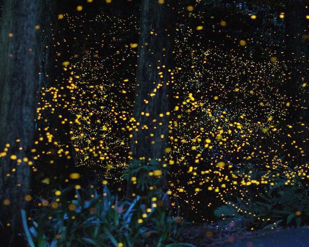حديقة الفراشات المضيئة في سيلانجور