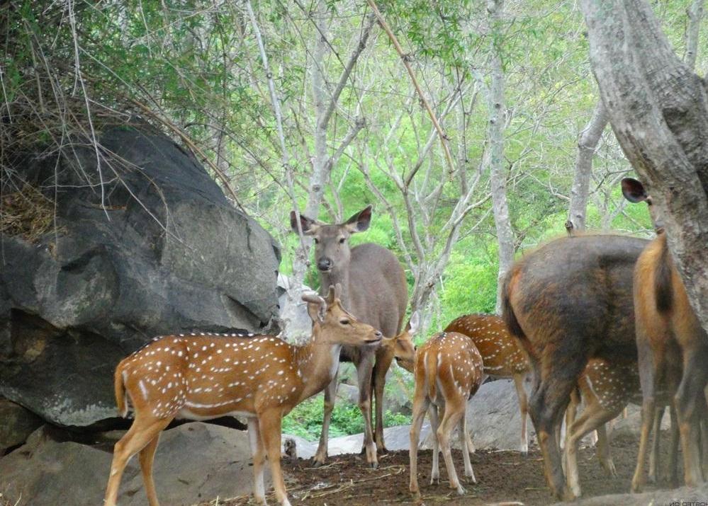 حديقة بانيرغاتا في بنجلور