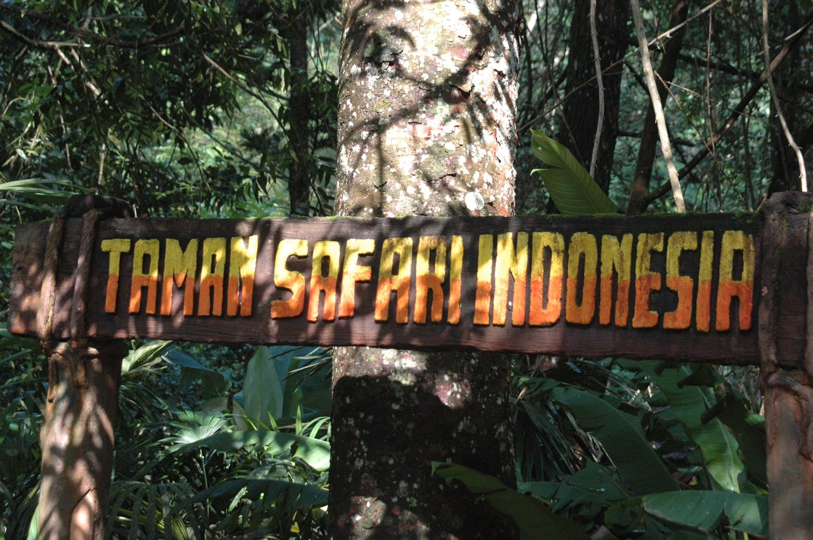 افضل 4 أشياء يمكن القيام بها في حديقة سفاري بونشاك اندونيسيا