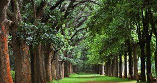 حديقة كوبون بارك