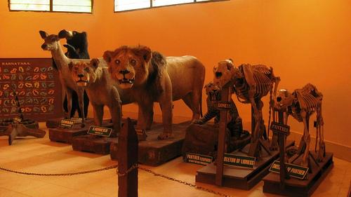 متحف حديقة بانيرغاتا في بنجلور