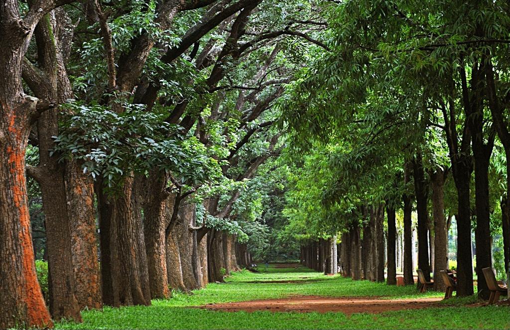 منتزه كوبون في بنجلور