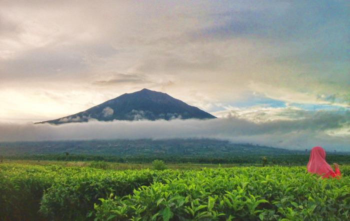 مزارع الشاي تشيبودي من افضل اماكن سياحية في باندونق اندونيسيا