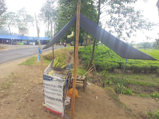 مزارع الشاي تشيبودي من افضل اماكن السياحة في مدينة باندونق اندونيسيا