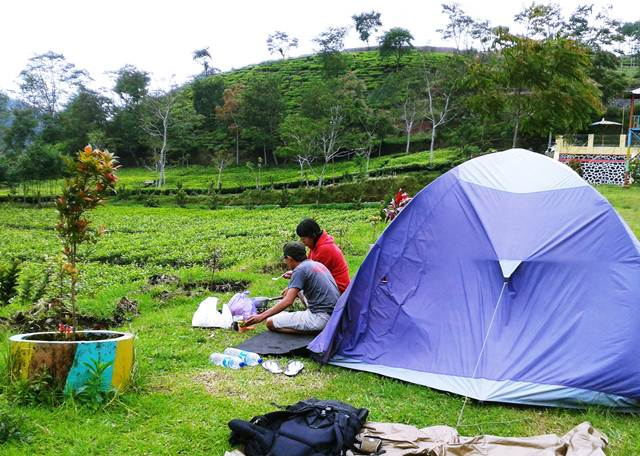 tea-plantations-9