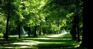 حديقة تيرغارتن برلين