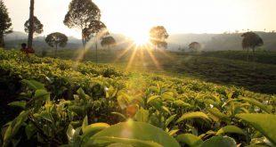 مزرعة جونونج ماس