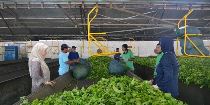 مزارع جونونج ماس من اجمل الاماكن السياحية في اندونيسيا