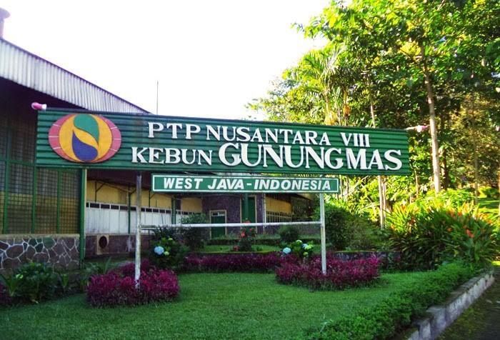 مزارع جونونج ماس بونشاك اندونيسيا