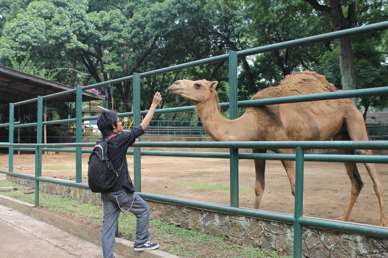 حديقة حيوانات باندونق اندونيسيا