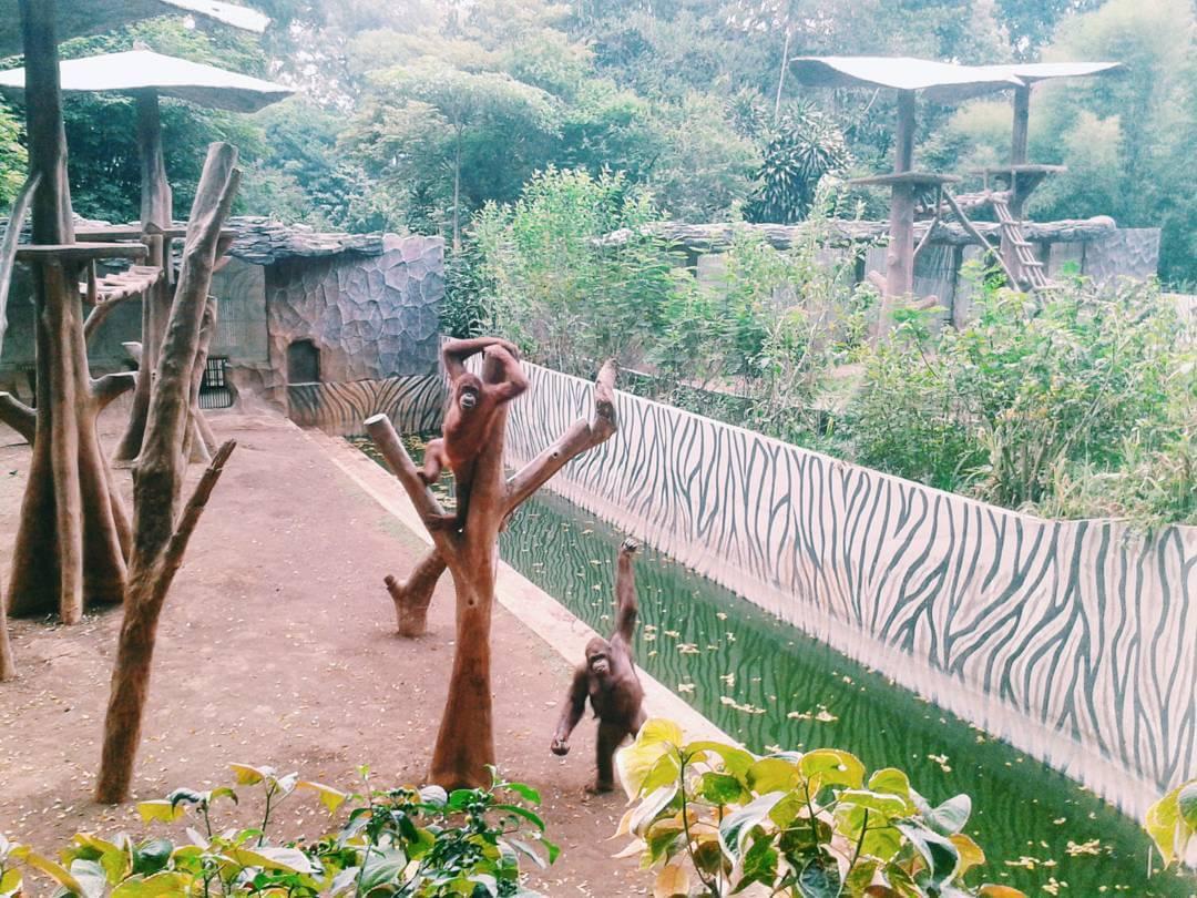 حديقة الحيوانات في باندونق اندونيسيا